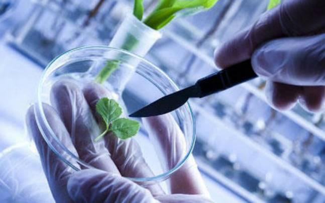 plant biotech
