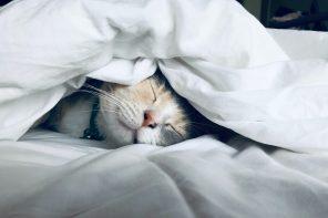 exercise on sleep